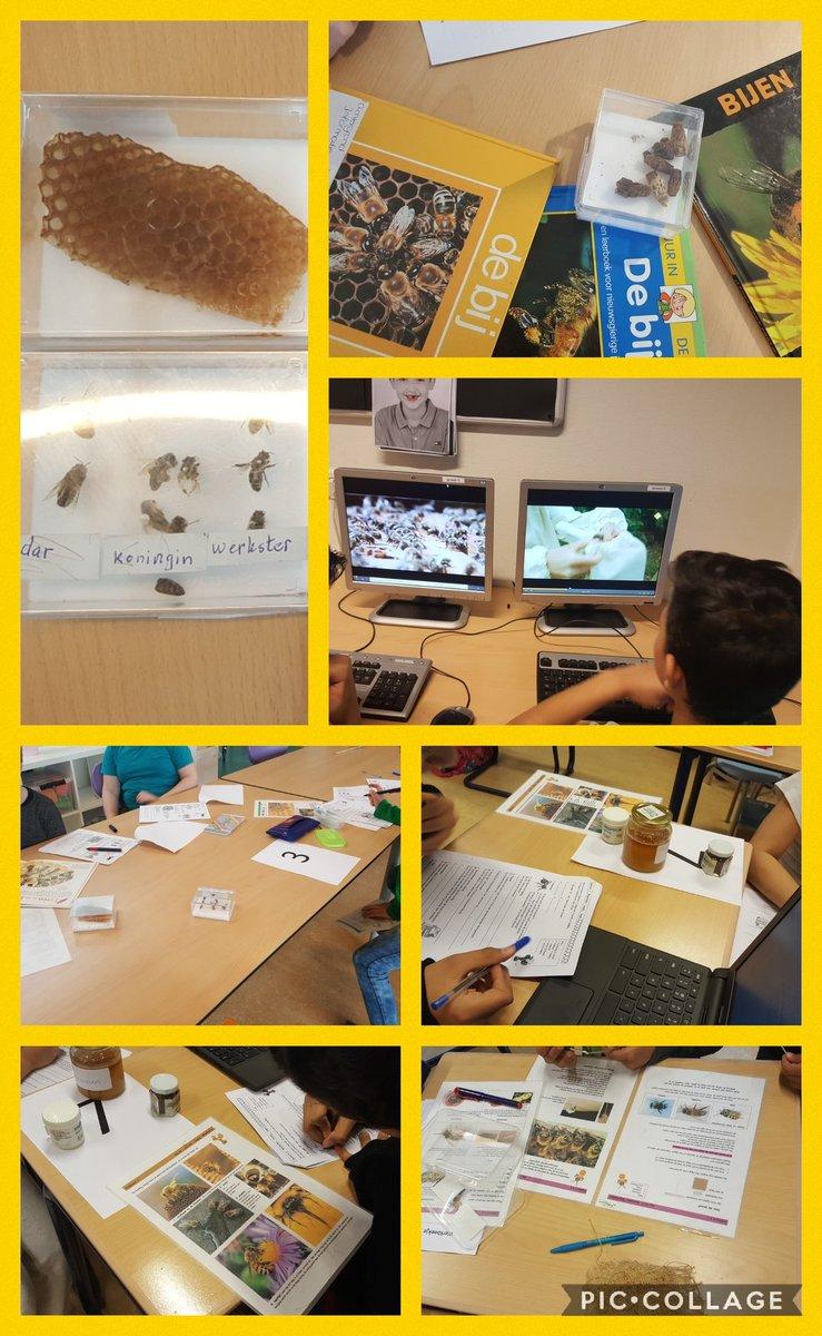 test Twitter Media - RT @MaraWeijenberg: Bijencircuit en een gastles van een echte imker in groep 6 van @Walsprong leerzaam en bijzonder! https://t.co/96rSaNh1xn