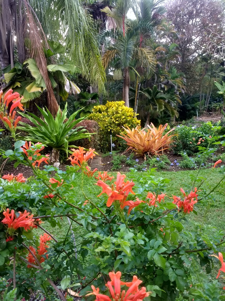 Too fantastic! Andromeda Botanic Gardens Barbados. The only @The_RHS Partner Garden in the West Indies. So much history, so much beauty! #barbados #bestofbarbados pic.twitter.com/XsK4mUio4r