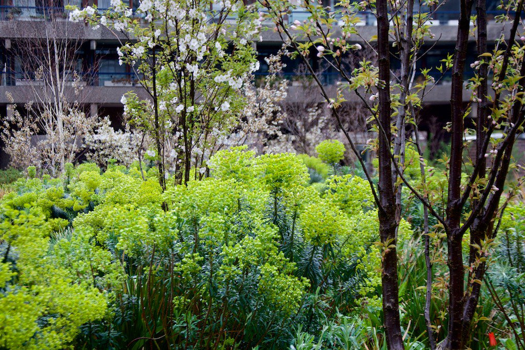 Nigel Dunnett On Twitter Same View The Barbican Beech Gardens