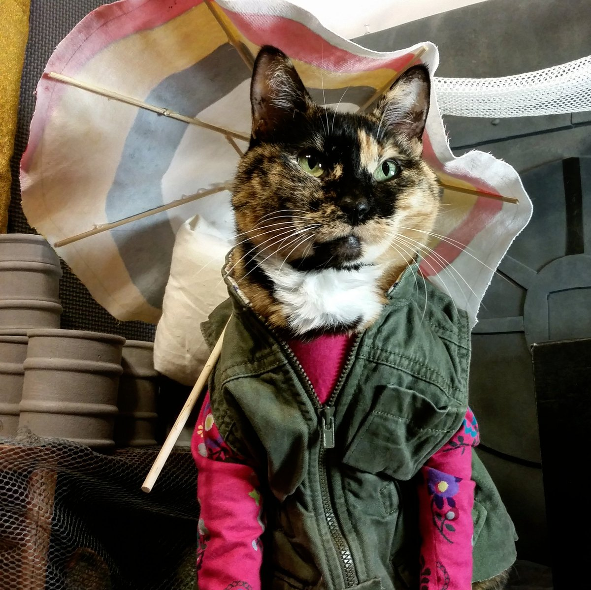 Image result for cats in clothes