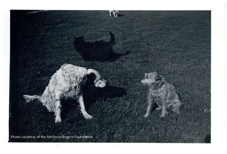 Fred Rogers Center On Twitter Happy National Pet Day The Little Dog On The Right Was Fred S Childhood Best Friend Mitzi
