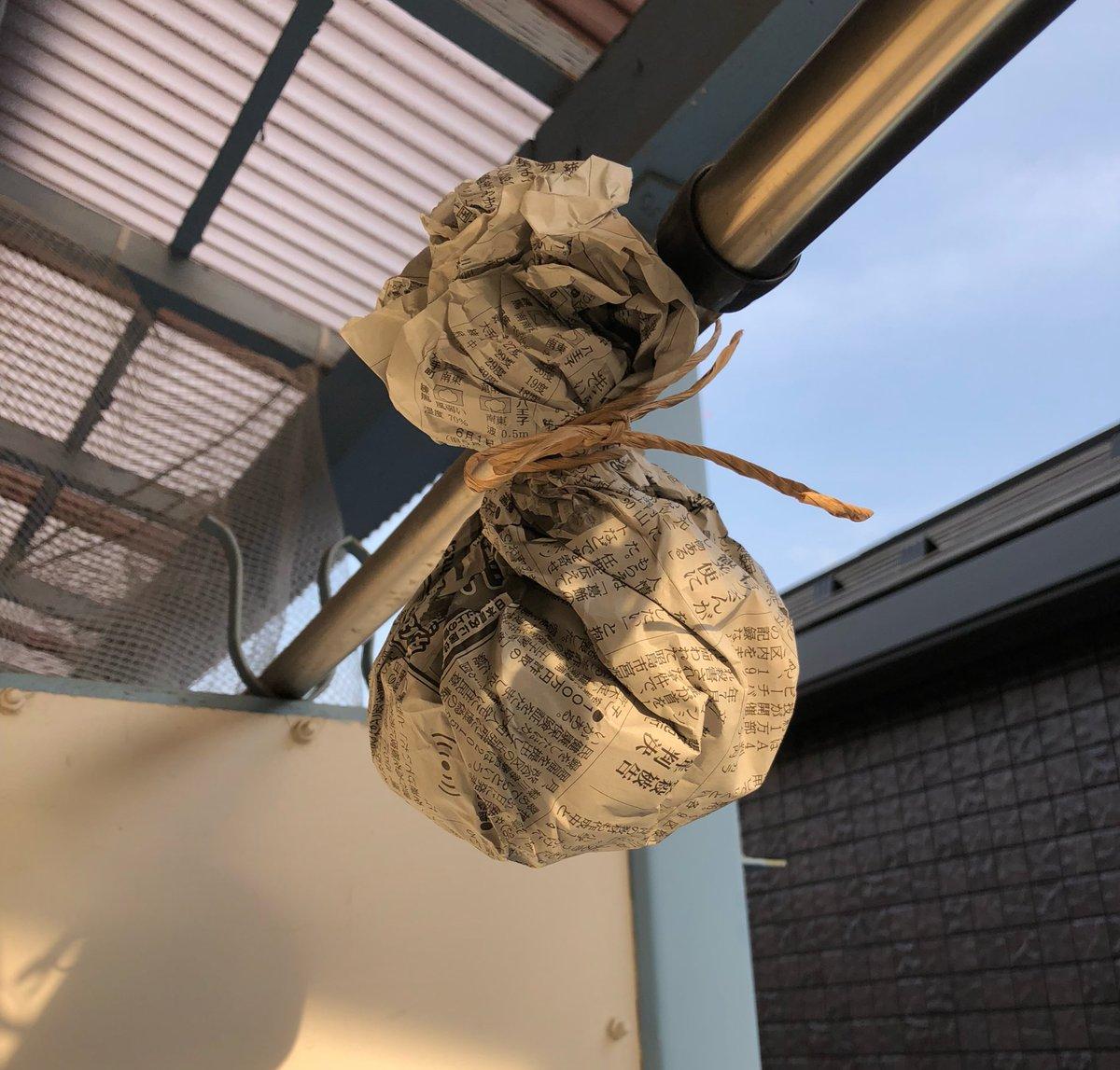 今年もアシナガバチが巣を作る場所の偵察に来ました。巣を作らせない方法として成功したのはこれ。巣に見立てた物を吊るす。先約が居ると思わせるそうです。薄荷も試したけど効果なかったので、ネットで調べたらこれが出てきました。  今のところ毎年成功しています。