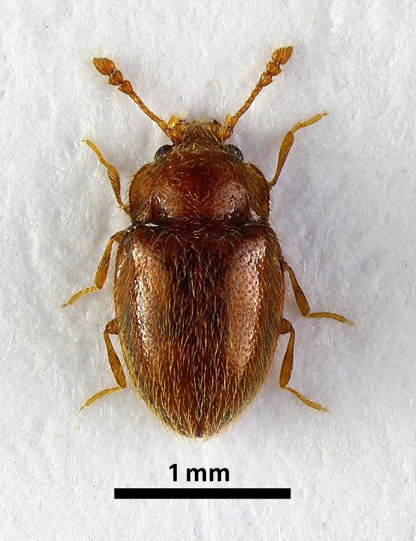 TanypteraGary photo