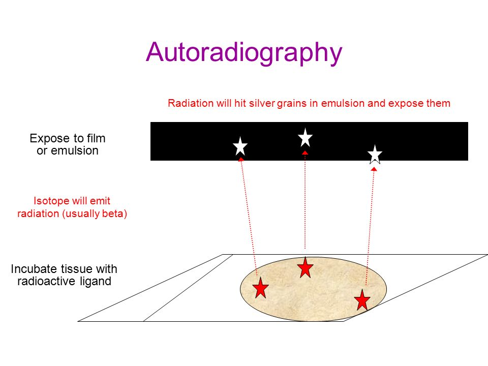 autoradiography hashtag on Twitter
