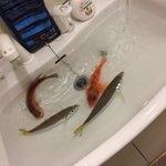 違和感ありすぎでビビる! 浴槽に魚が泳ぐ衝撃の画像がコチラ!