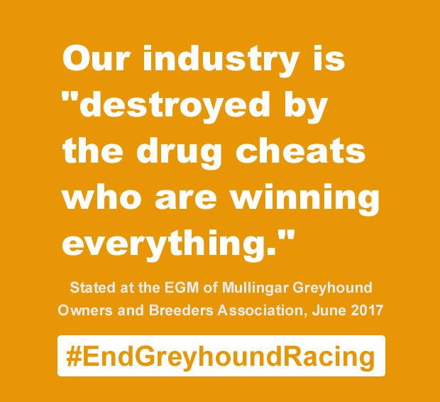 Greyhounds are doped to affect the outcome of races. Don't go greyhound racing.