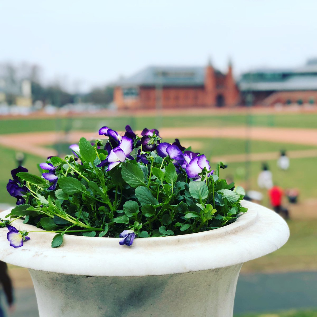 test Twitter Media - RT @AnthonyMasonCBS: Spring at last @wesleyan_u https://t.co/Us7lXuJmKM