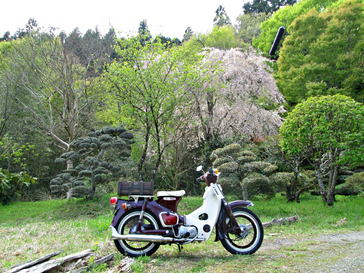 の 公園 松茸 山 自然 森