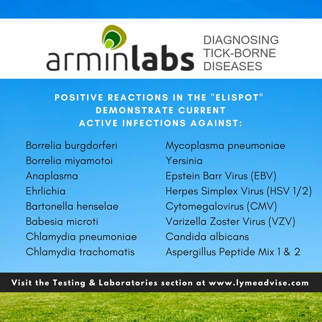 arminlabs hashtag on Twitter