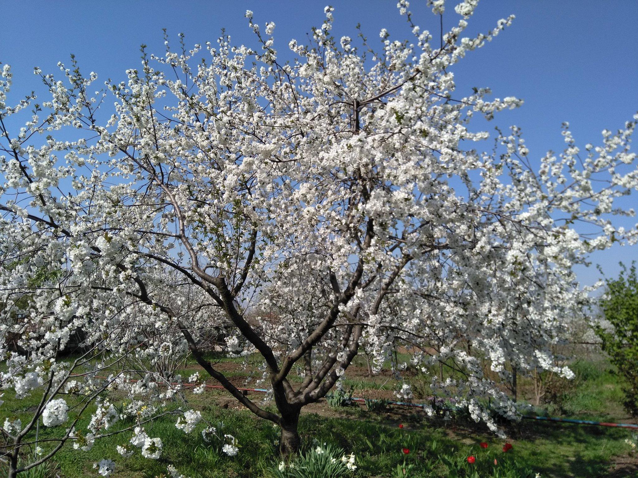 картинки когда цветут сады обувь недорого том
