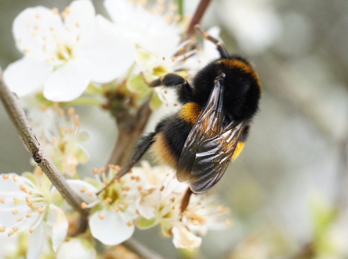 Blooms For Bees On Twitter With Better Weather On The Horizon