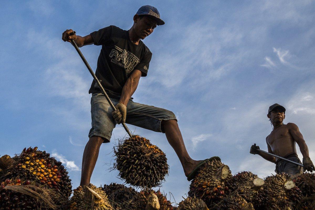 test Twitter Media - Vorige week onthulde @oneworldnl dat ABP 174 miljoen investeerde in het kappen van uniek regenwoud in Papua. Mensen zijn hier, net als wij, woedend over! Roep @abppensioen op te stoppen met investeren in #palmolie door mee te doen aan onze online actie https://t.co/1CgeKMlf4O https://t.co/3RJC4gf12A