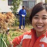 Image for the Tweet beginning: PhD Student Sayaka Sakuma is