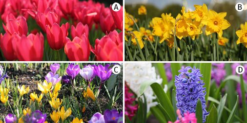 Image result for your favourite Spring flower