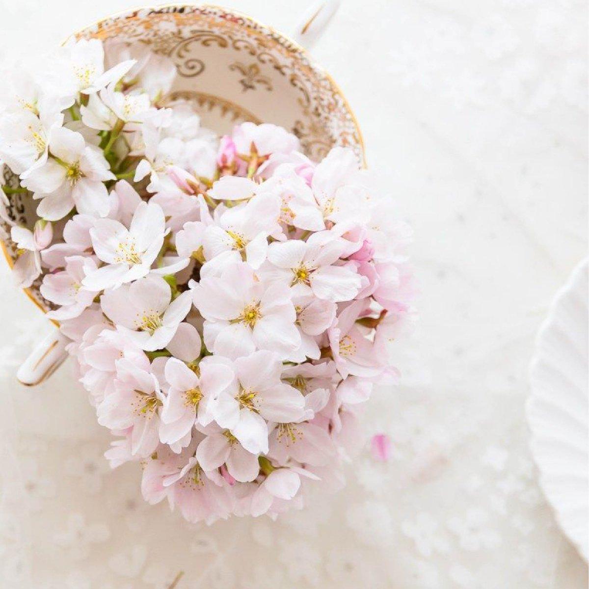 Mvenpick Hotel Karachi On Twitter Cherry Blossom Festival At
