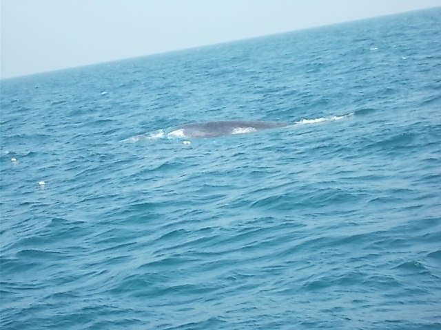 Happy #WorldDolphinDay  This year in Jan #Pakistan declared d Indus River Canyon #ExclusiveEconomicZone as #MarineProtectedArea #MPA to achieve #AichiTarget11  Around 19 species of #cetaceans ie #baleenwhales #toothedwhales, #porpoises are known from the area #riverdolphins #dams<br>http://pic.twitter.com/7BW0Pkuc0u