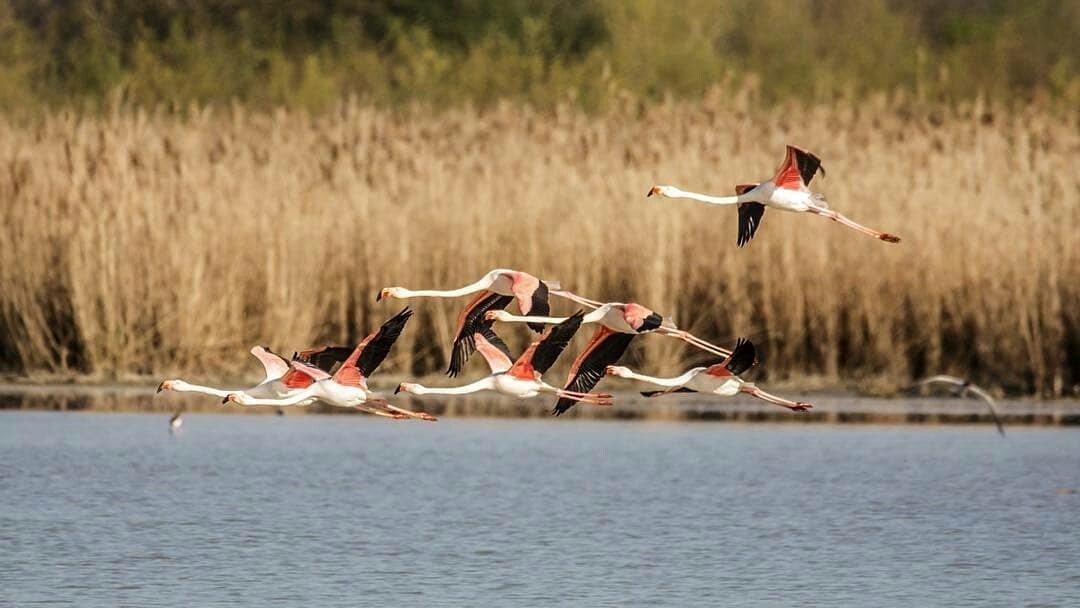 Risultati immagini per OASI WWF ALVIANO