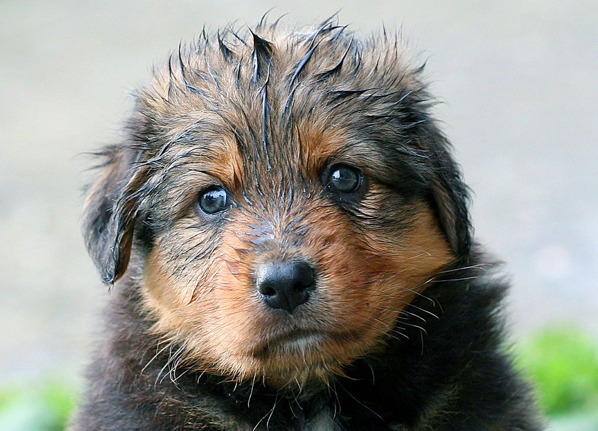 I love #puppy #pictures! <br>http://pic.twitter.com/nZe4IybR8e