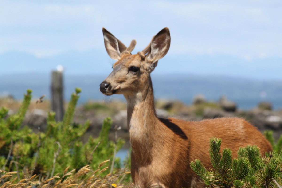 download Diálogos: Protágoras Górgias O banquete