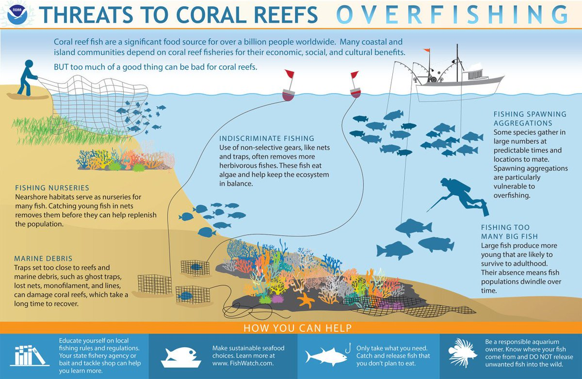 All seafood is not created equal when it comes to how it ends up on your plate. This @NOAA graphic shows how overfishing can be damaging to coral reefs. Our #EarthWeek tip for today is to use the @SeafoodWatch app to make sure you&#39;re eating #sustainable seafood.<br>http://pic.twitter.com/HwSQMKYbiE