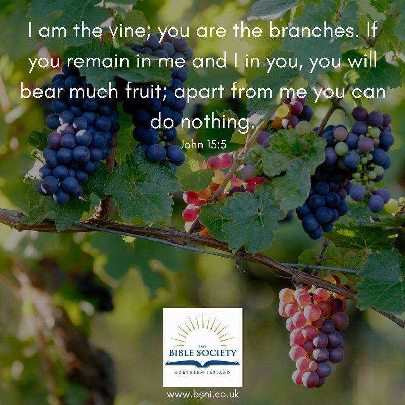 """Bible Society NI On Twitter: """"""""I Am The Vine; You Are The"""