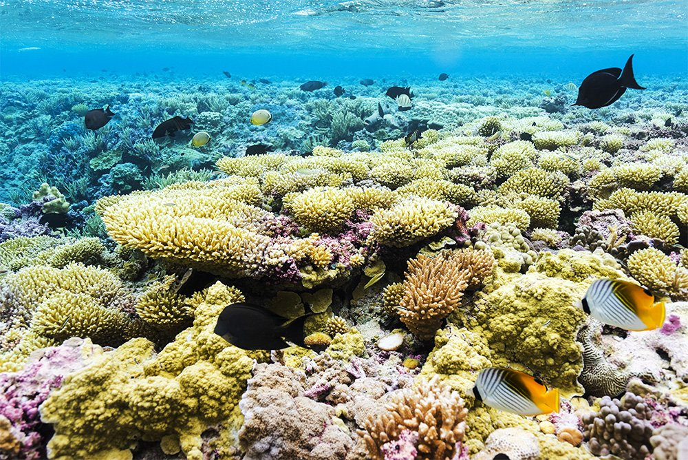 Bye, bye #invasivespecies and hello #HopeSpot! Palmyra Atoll has been declared a Hope Spot by @MissionBlue and @SylviaEarle@USFWS    http:// ow.ly/lOl530jICX1  &nbsp;  <br>http://pic.twitter.com/x8KQRCSltZ