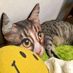 目を疑う光景が目の前にw愛ネコが目ヂカラたっぷりに顔だけ巨大化!