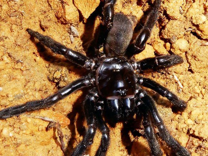 World's oldest-known spider dies https://t.co/4ENqBmx4Bt