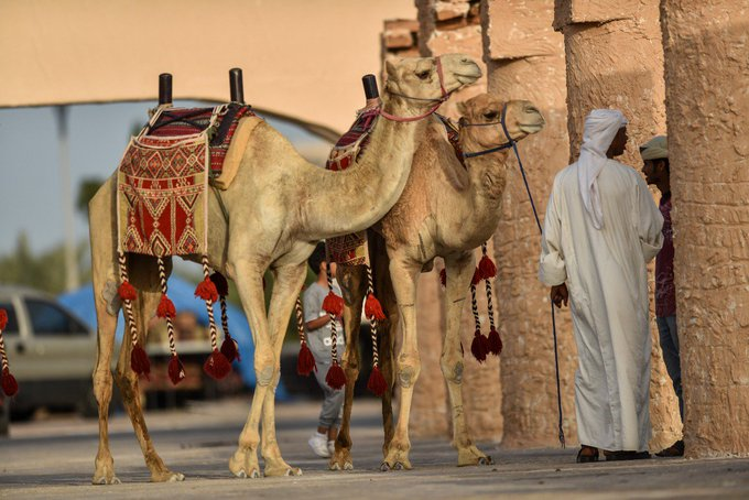 #مهرجان_الساحل_الشرقي صورة فوتوغرافية