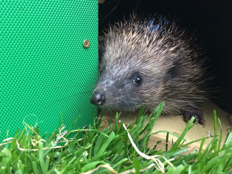 Wanted - homes for #hedgehogs within 10 miles of #york - send me a direct message if you meet all the criteria please   https:// littlesilverhedgehog.com/2016/02/10/wan ted-homes-for-hedgehogs/ &nbsp; … <br>http://pic.twitter.com/fCP2lXEIuu