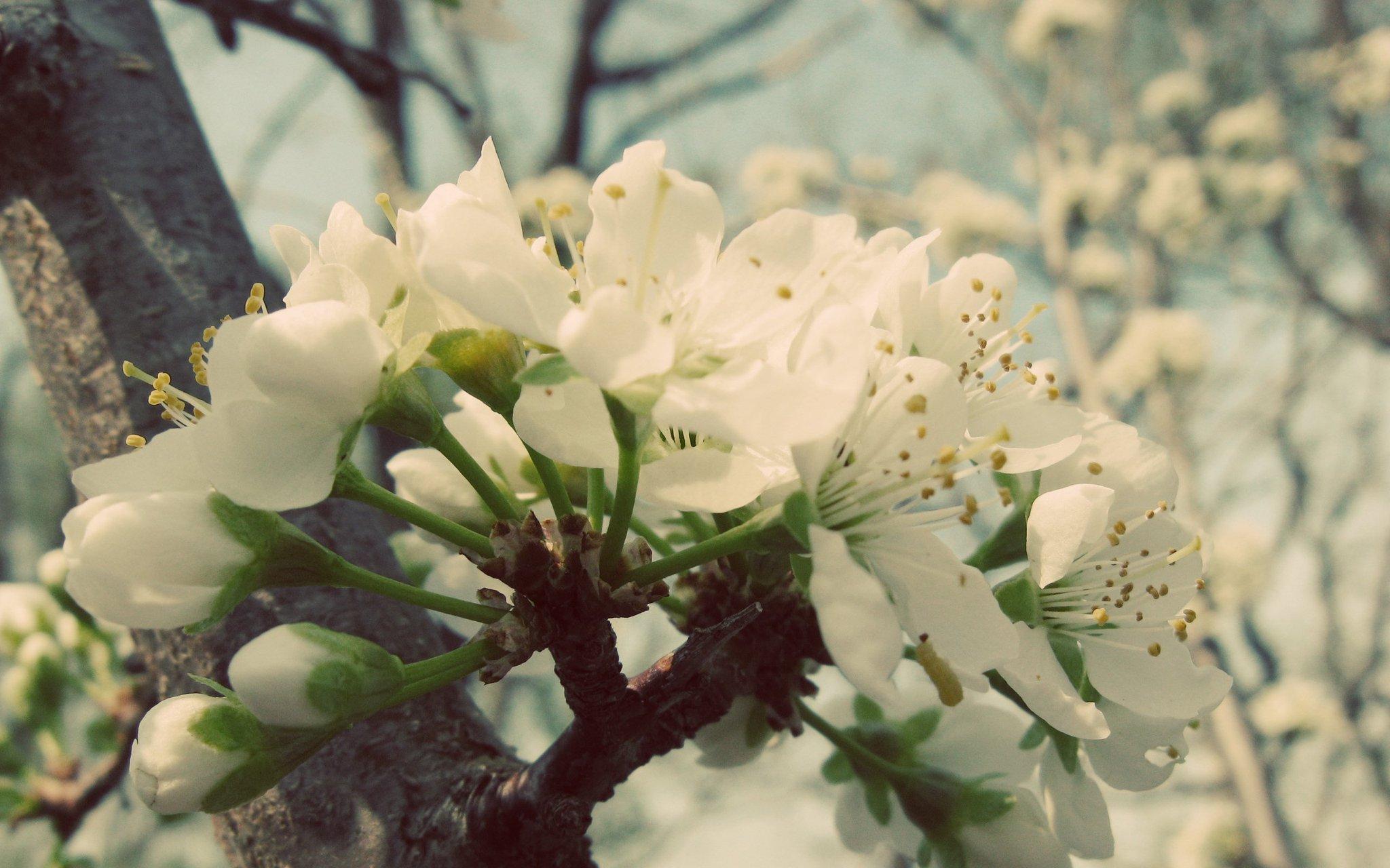 красивые картинки весна на рабочий стол широкоформатные это самое сочетание