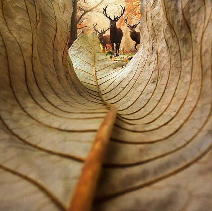 One of Kobi Rafaeli amazing #pictures. Certainly, one of my favorites.   View from a leaf <br>http://pic.twitter.com/zUrWqwJFv8