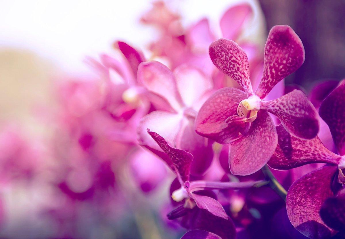 Thai Orchids Exporter Thaiorchidsexp Twitter