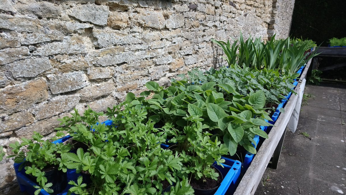 Sun's out, we've got ours out! Plants that is! All ready for our Spring Garden Show (20-22 Apr). Garden team have been busy growing wonderful plants to sell at the show including iris, salvia, giant scabious, hollyhocks & geraniums. Friday is the best day for plants. @SurreyLife