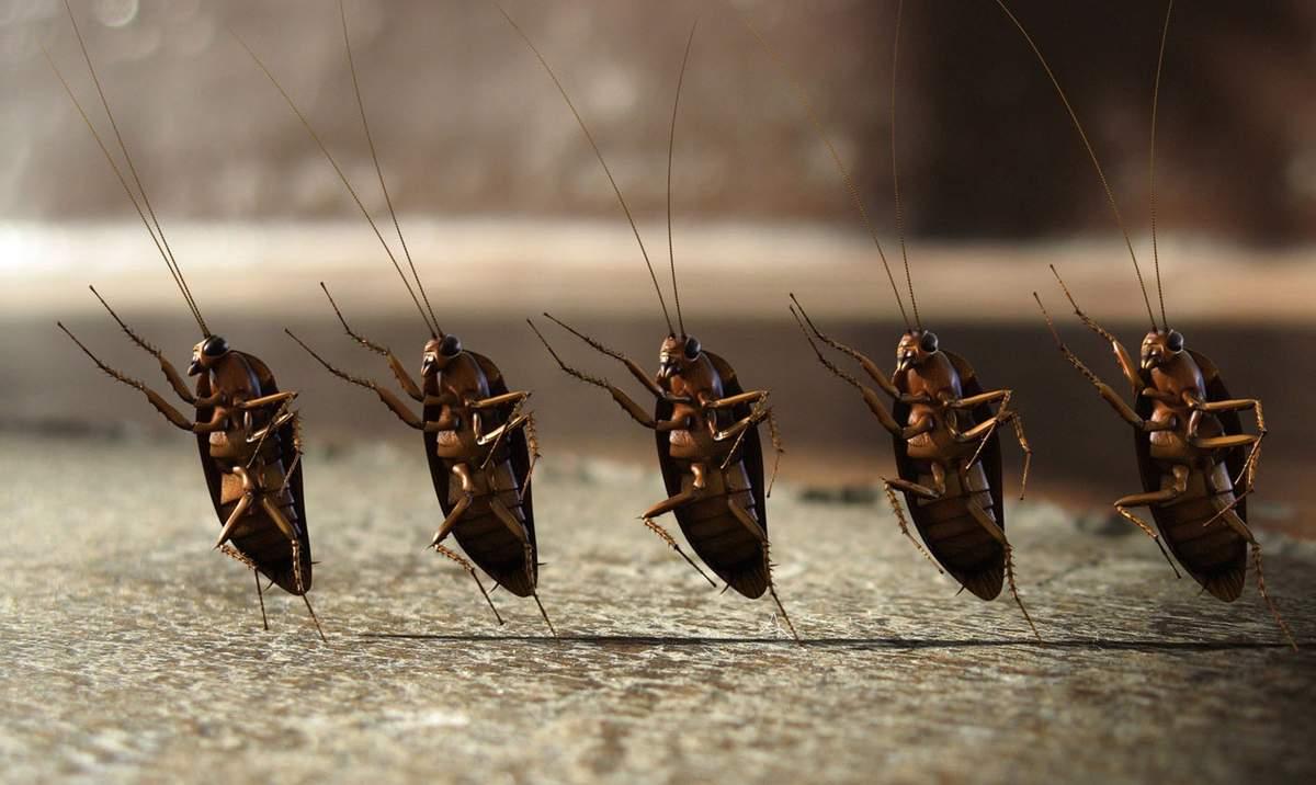 Прикольные картинки насекомых на рабочий стол