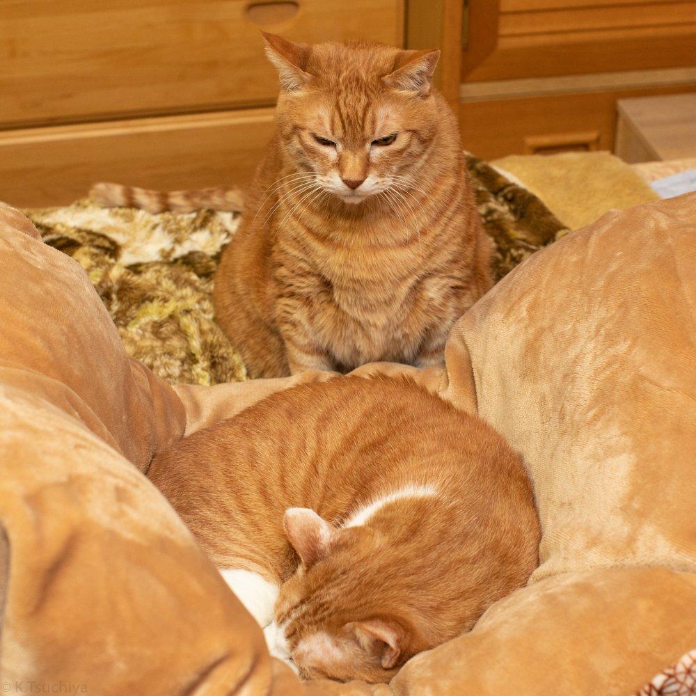 無言のプレッシャーを与える兄ネコと、ガン無視な妹ネコ