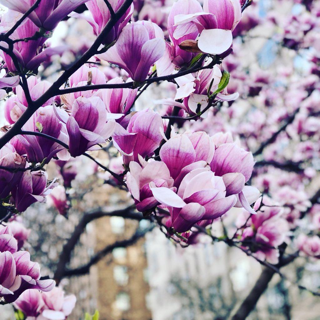 Heather Edwards Lmhc On Twitter Like The Magnolia Tree She