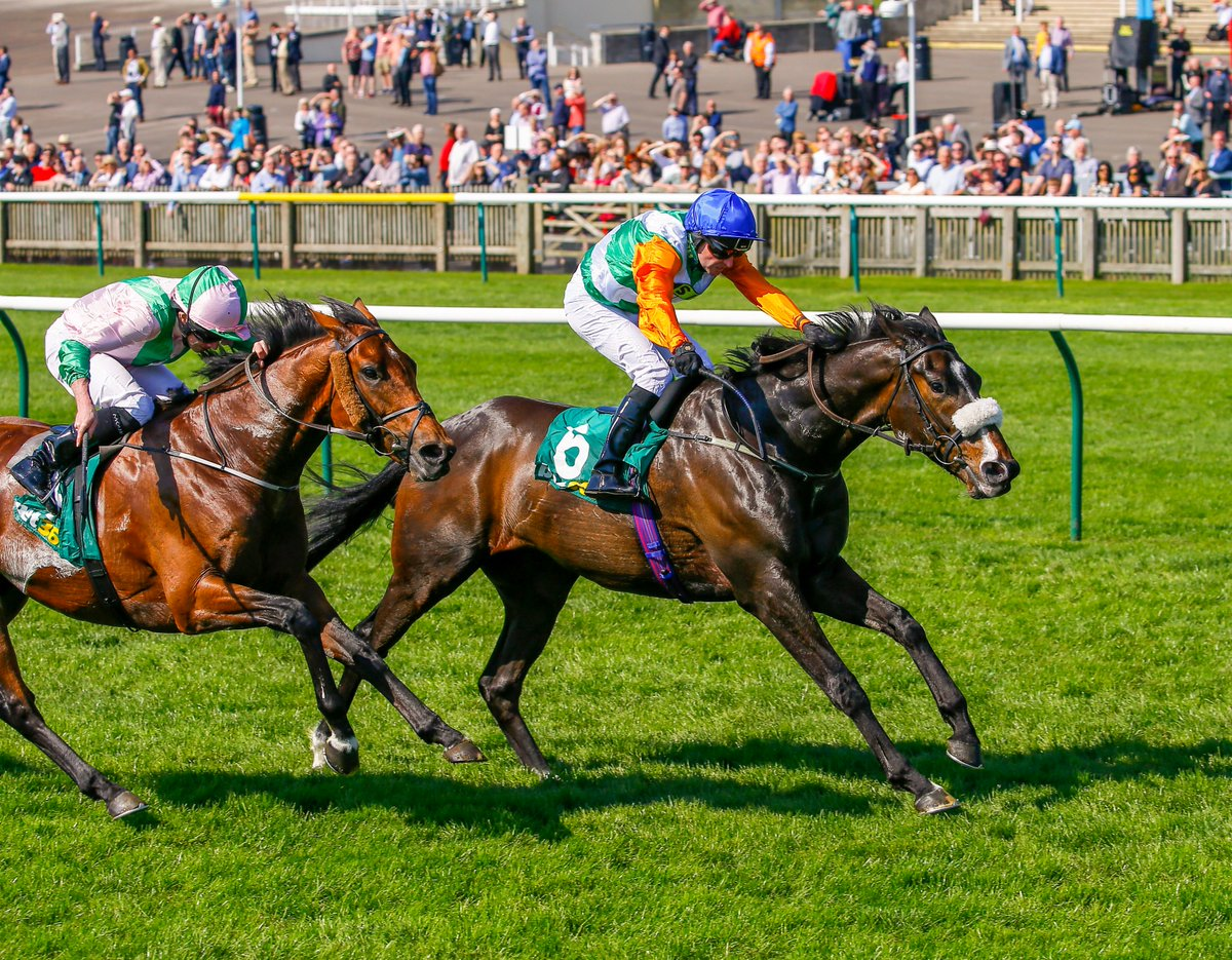 FOREST RANGER (IRE) lands the 1m1f £60,000 Group 3 Earl Of Sefton Stakes @NewmarketRace; the Mrs H Steel-owned gelding is a son of @BallylinchStud sire Lawman, trained by @RichardFahey & ridden by @Tonyhamilton83
