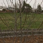 Image for the Tweet beginning: A Spicebush is also patiently