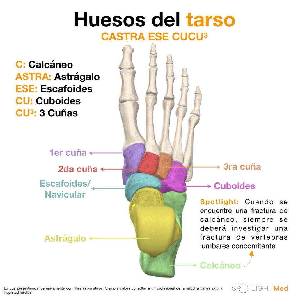 Excelente Anatomía Hueso Del Tarso Bandera - Imágenes de Anatomía ...