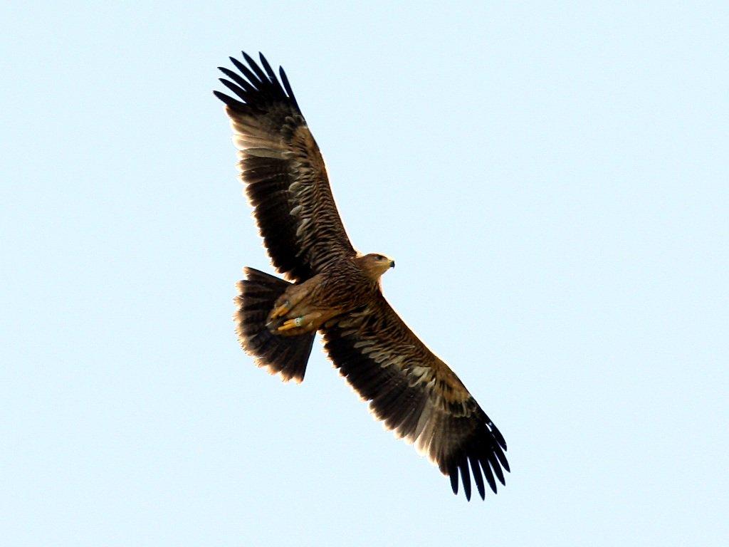 хищные птицы ульяновской области профильной трубы может