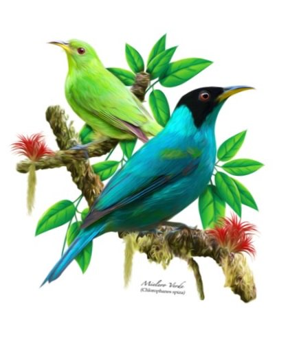 Green Honeycreeper (Chlorophanes spiza) #painting #art<br>http://pic.twitter.com/ubQww6Nyhb