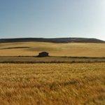 #ruralismo