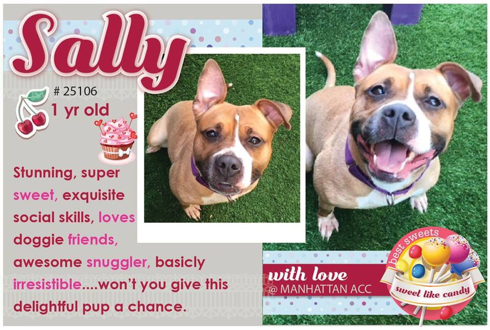 YEAR OLD #SALLY LOST HOME #NYCHABAN &amp; CONDEMNED BY #NYCACC FOR #COLD! NEEDS LOVING FAMILY! #RESCUEDOGS #FOREVERHOME  #FOSTER #ADOPT #BanNYCHABAN #CIRDC #BRINDLE  #PetFriendlyHousingNYC #RescueIsTheWayToGo  #HumaneNY #EndBSL #SaveSALLY  https://www. facebook.com/mldsavingnycdo gs/photos/a.428526917333584.1073742030.112453902274222/710957675757172/?type=3 &nbsp; … <br>http://pic.twitter.com/sULbnjIr8g