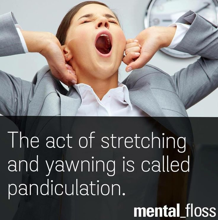 Pandiculation = the act of stretching and yawning  ι(´Д`)ノ  via @mental_floss   #vocabulary