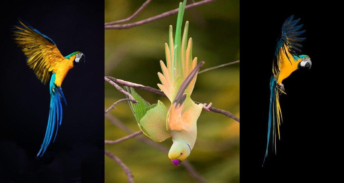 Parrot bird #painting #art<br>http://pic.twitter.com/NUyTyd1wdk