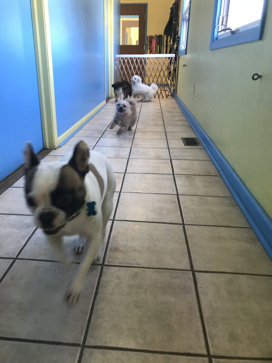 Oberon leads the way with Tiger Lily, Wyatt, and Tucker R. right behind him!
