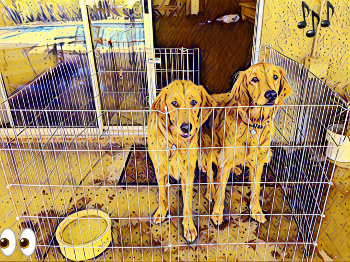 My sister Lola &amp; I hope you have subscribed to our YouTube Channel and enjoy our movies.  Watch for new movies coming soon!   https://www. youtube.com/bellasbigadven ture &nbsp; …   #dogs #travel #adventure #journey #explore #America #golden_retriever #myfriend_bella #animals #pets #movies<br>http://pic.twitter.com/Dm4Xc55lFd