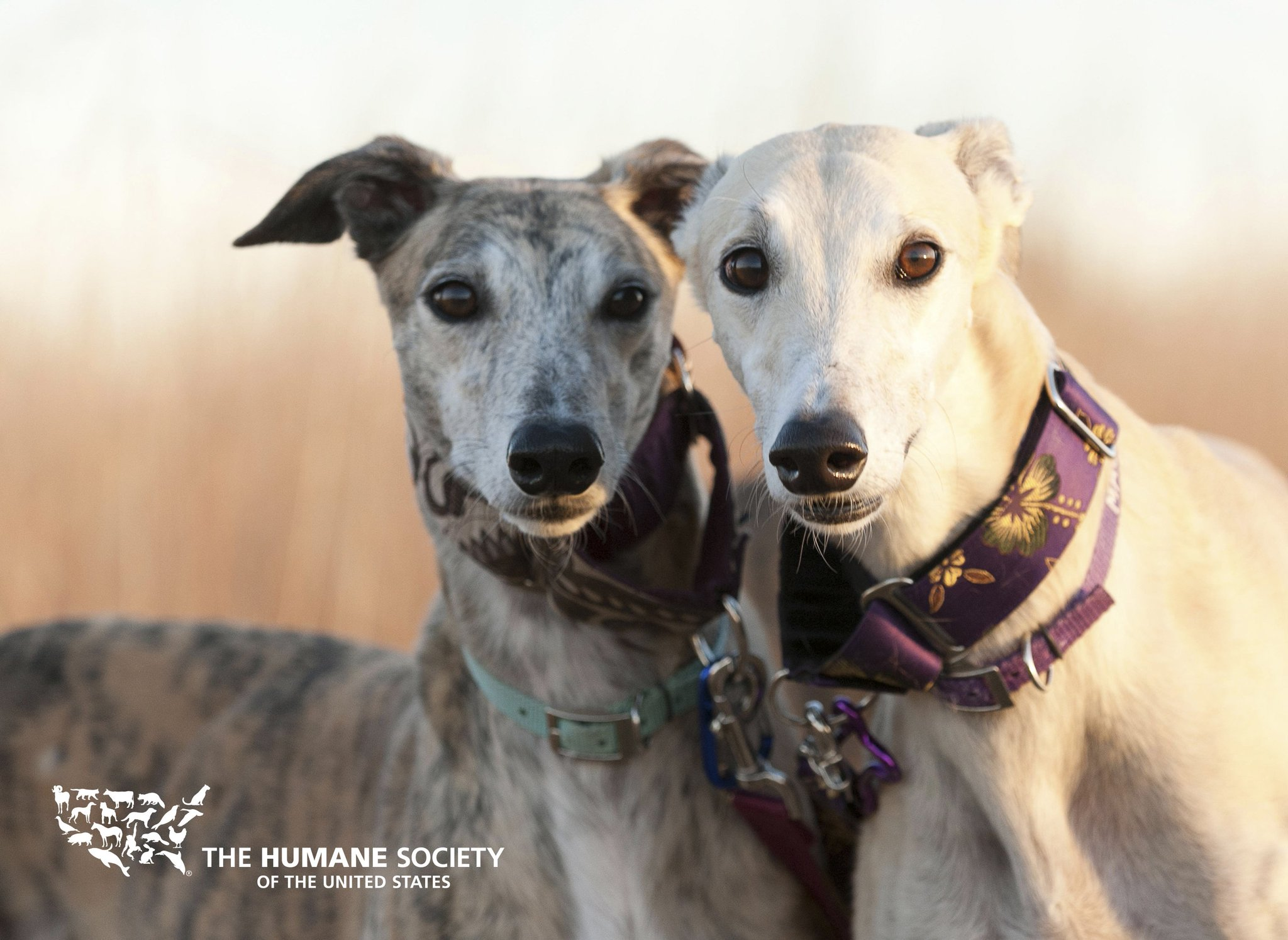 Good news! #Florida is now one step closer to phasing out greyhound racing: https://t.co/JyR4hCUktr https://t.co/cL8V7JOWe3