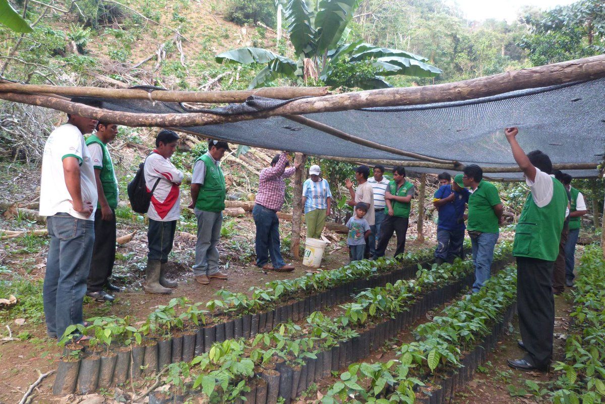 Peru: Over 6,000 families benefit from alternative crops in Puno https://t.co/Yj6HBuK9zg